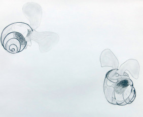 5. pteropods small